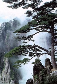 Huangshan China; free picture from Wikipedia; Immanuel Giel