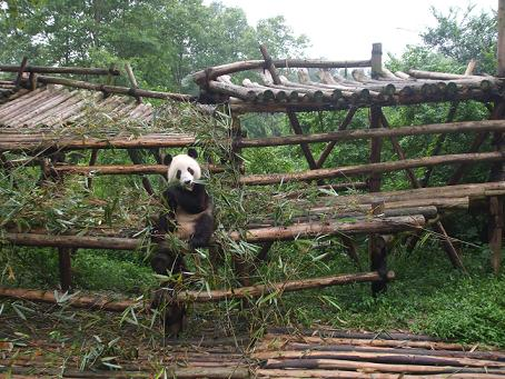 Chengdu Panda Breeding Research Center