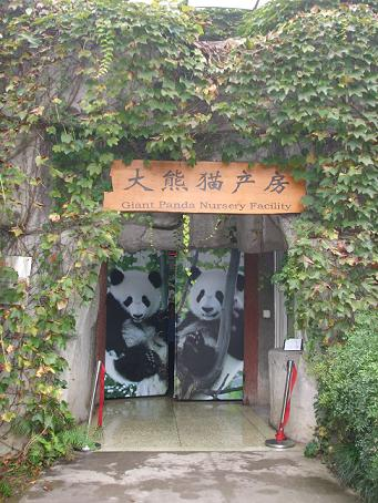 panda breeding center chengdu